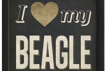 Beagles <3 / by Acacia Leatherman