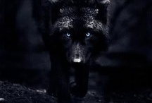 Animals - Wolf / by Kristi