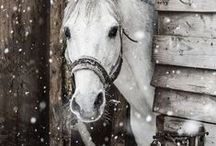 WINTER / by Barb