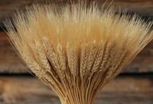 Thanksgiving ~ The Bountiful Harvest ~ Psalm 100