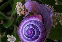 SHADES  of  PURPLE   2 / by Barb