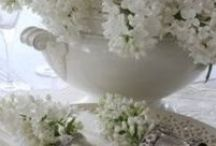 SHADES  of  WHITE  / by Barb