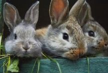 BUNNIES / by Barb