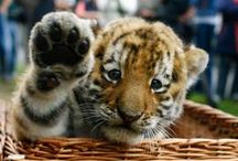 High Five Friday / We love homes and we love cute animals
