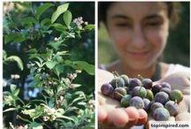 FARM - Blueberries