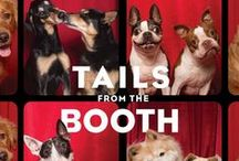 Tails From the Booth / These photos include pages and outtakes from my published dog photography book, Tails From the Booth. I love the range of emotions and fun faces these dogs gave me in these photos!