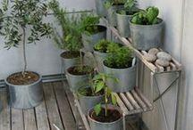 gardening <3 / by Amie Simon