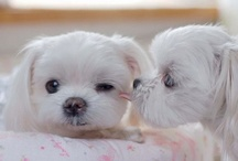 Adorableness / All of the most adorable animal pictures that will make you squeal. / by Dana Cohen