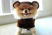 Costumed Adorableness / by Dana Cohen