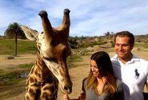 GIRAFFES  / My favorite animal! #giraffe #animal #baby #zoo  / by Stubborn Mule 💜