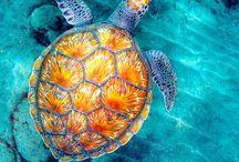 Sea Turtles / by Cassady Caldwell