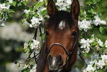 Pferde und Co.