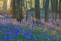 Springtime splendour / by Rachel_Sunset