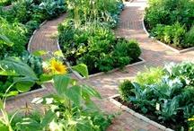 Kitchen Garden & practical tips / by Rachel_Sunset