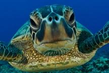 Sea Turtles / by Jeannie Sorel