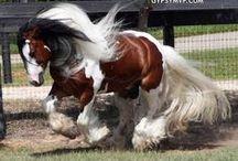 Horses / by Kayla Kettelson