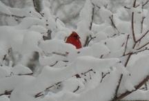 Alex's sense of snow