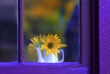 White.....Lilac.....yellow / colors / by Barbara Gilden