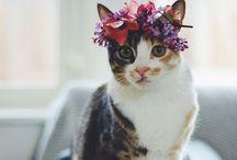 Feline / by Chloe Williams
