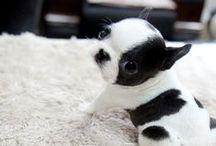 Puppy Lovin'