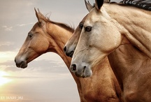 The love of Horses  / by Randy W Bounds