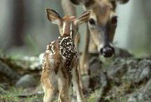 wonderful wildlife / Everything beautiful, wild and untamed