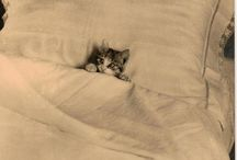 """Unbounded Cuteness / Things that make me go """"awww"""""""