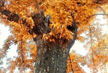 amazing trees / Beautiful and inspiring Trees