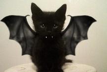 cats & bats / by Foster Kitten