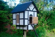 Chicken and Coop Inspiration / by Someone named Michelle