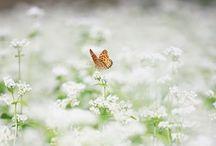 Butterfly Dream / Spread Those Wings...