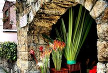 Flower  and  garden  shop