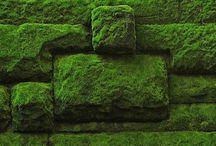 Moss  苔