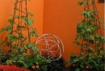 トレリス  蔦植物アイディア