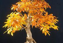 Bonsai favorites - exceptional beauties / The most beautiful Bonsais