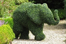 Gardening / by Ann VanSant