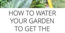 ~Simple Gardening~ / Gardening tips! Vegetables, compost, pest control, organic, grow, gardening diy, how to. If you want to be added to this group board, please follow my boards and message me to be added as a contributor.  Please repin often. The more we do the better this board will be for everyone! Only pin long vertical pins with great descriptions, please. http://simplelivingcountrygal.com/