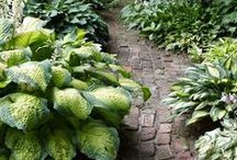Borders and Paths / Be fluffy-be green: Plants, placement and design / by Pamela Broz