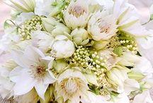 BLOMSTER & INNEPLANTER / Blomster jeg kan se for meg i livet mitt