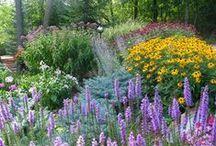 Garden / by Denise Reid