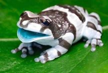 Lizards&Frogs