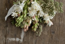 Wedding Bells / by Sara Denney