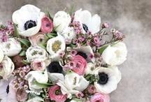 * Flowers ~ Fleurs *