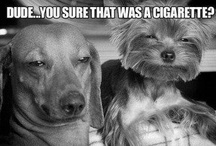 Cats and Dogs / by George Takei