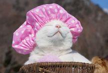 Feline Funnies / by Susanne Fountain