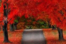 scenery / by Jeanna Shealy