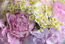 Peony Peonies Wedding Flowers  / Peony flowers for wedding blooms and wedding bouquets