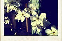 Polaroid <3 / Photos in a little white frame