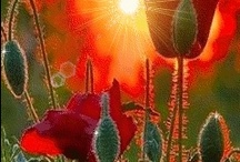 Color My World / I am so drawn to bright, vivid colors!  Seeing them makes me happy!   / by Marsha Ross