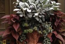 Autumn Garden / Browse our fall inspirations; full of gold, burgundy, and fiery hues